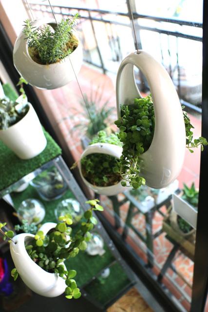 Succulents Archives Adam S Garden Florist