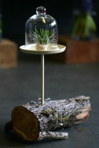 glass dome terrarium