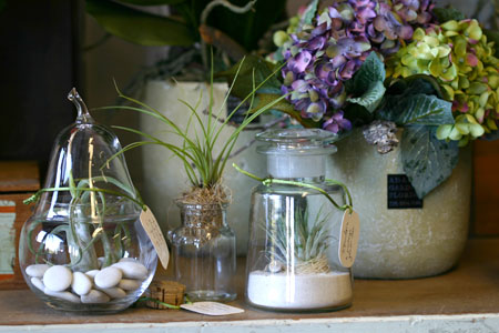 air plants in vintage glassware