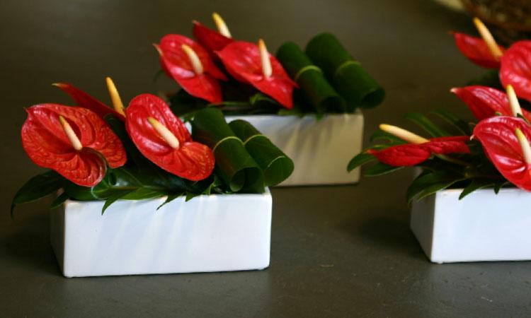 Modern Table Florals Red Adam S Garden Florist