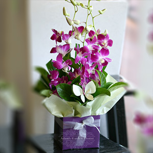 orchid-box-floral-arrangement
