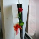 rose-single-box