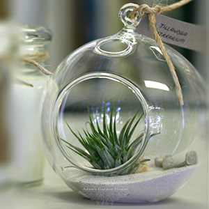 tillandsia-terrarium-delivered-gold-coast