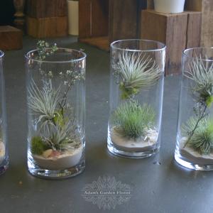 tillandsia-terrarium-gold-coast-florist