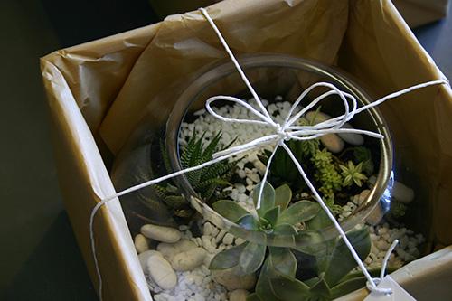 succulents-terrarium-gift-parkwood-gold-coast