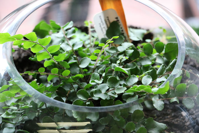 Top 5 Popular Plants For Your Terrarium Open And Close
