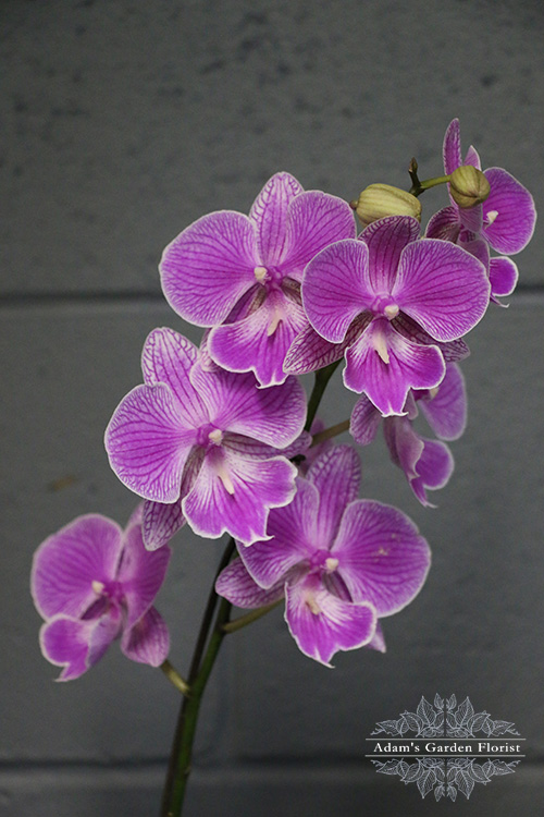 floral delivery parkwood gold coast orchid flower purple