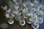 tillandsia-vase-arrangements
