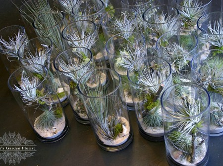 tillandsia-vase-arrangements