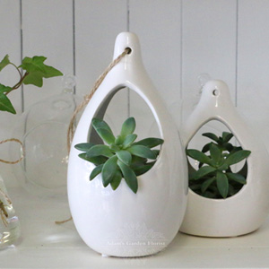 succulent plant in hanging pot delivery gold coast florist