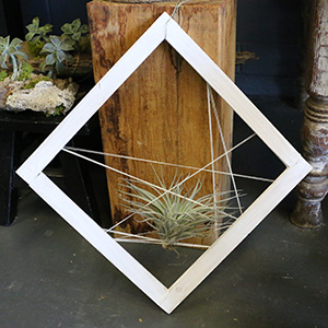 tillandsia gift in frame string art