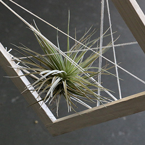 string art air-plant gift gold coast