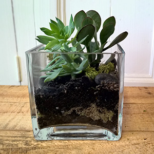 Parkwood florist planted gift succulents in glass cube