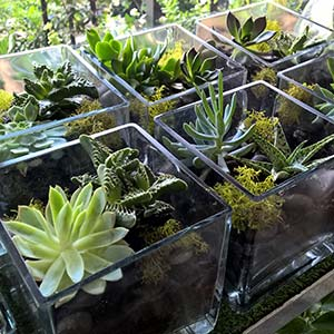 succulent plants in glass cube vase