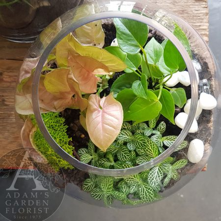 terrarium gift indoor plants Southport delivery