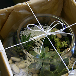 succulents living plant gift for delivery