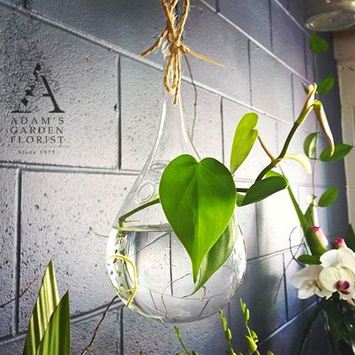 plant gift hanging vase gold coast