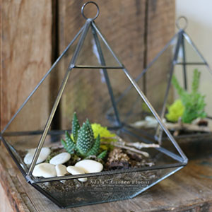 Living plant in geometric terrarium