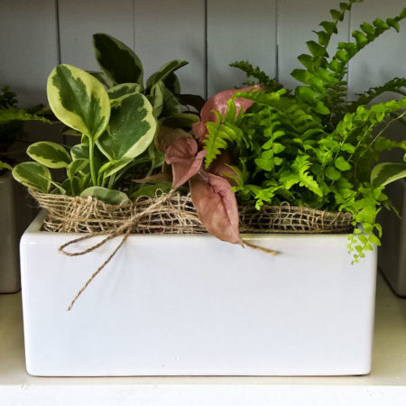 indoor living plant gift set of three gold coast