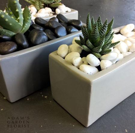 plant gift gold coast