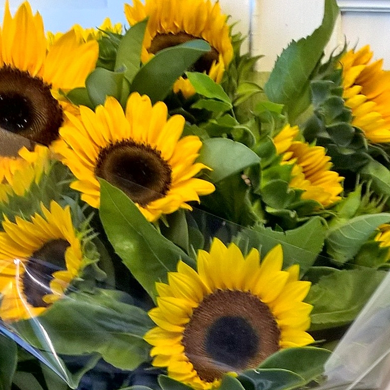 simple sunflower bouquet gold coast delivery