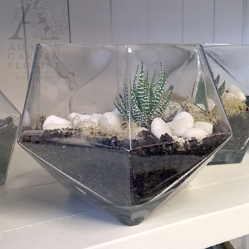 Geo Glass Terrarium With Succulent Adam S Garden Florist