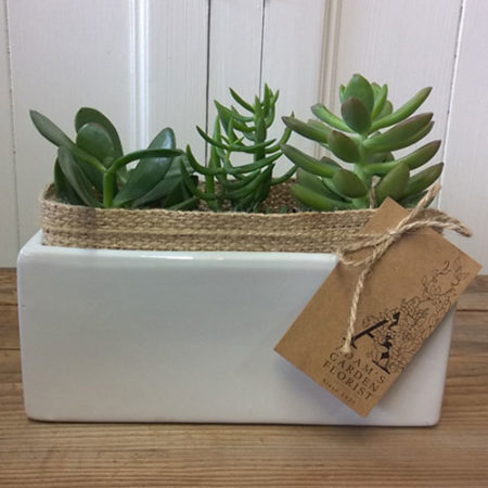 succulent plants gift gold coast