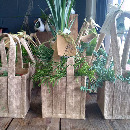 succulent plant in jute bag gold coast delivery