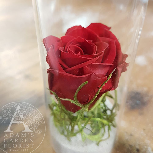 preserved rose petite tube