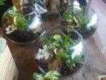 terrariums delivered gold coast florist