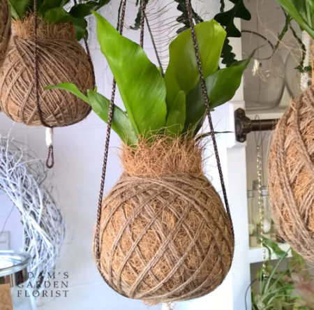 kokedama indoor plant gift delivered gold coast
