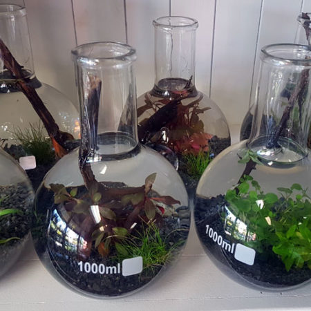 mini indoor submerged garden gold coast delivery
