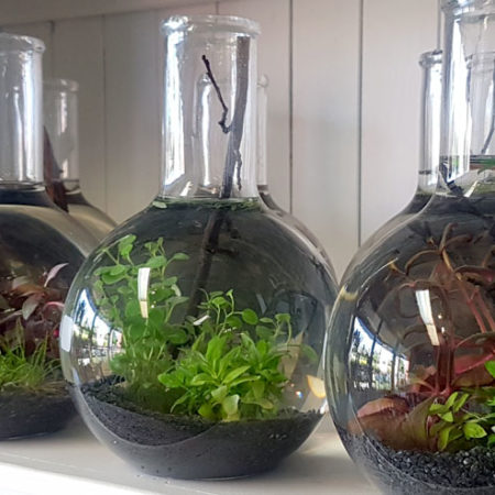 mini indoor water garden gold coast delivery