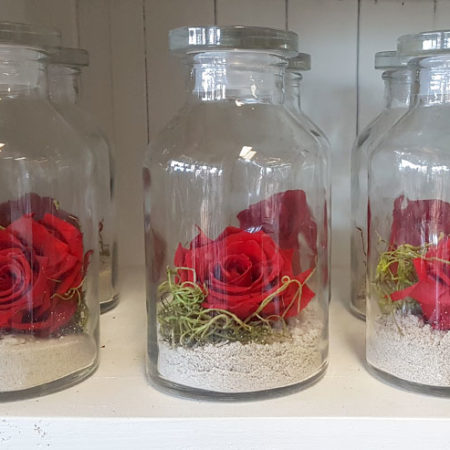 red preserved rose in jar gold coast