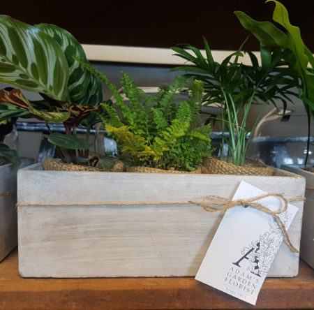 small indoor plants gift gold coast delivery