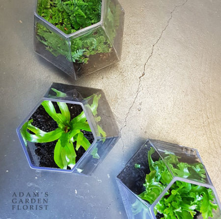 houseplants in glass Gold Coast delivery