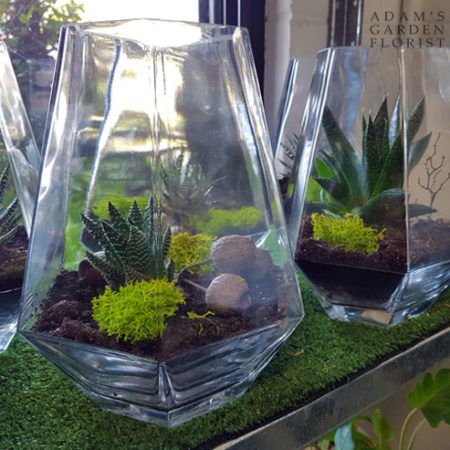 simple terrarium with succulent gold coast