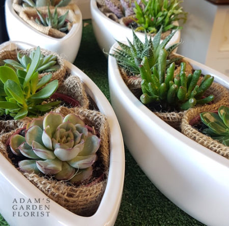 succulent plants in ceramic planters delivered gold coast