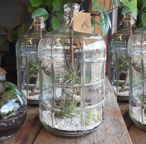 Large Bottle Air Plant Terrarium Adam S Garden Florist