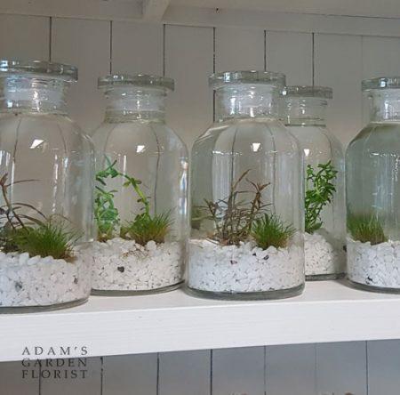 tiny water garden terrarium jarrarium gift gold coast delivery