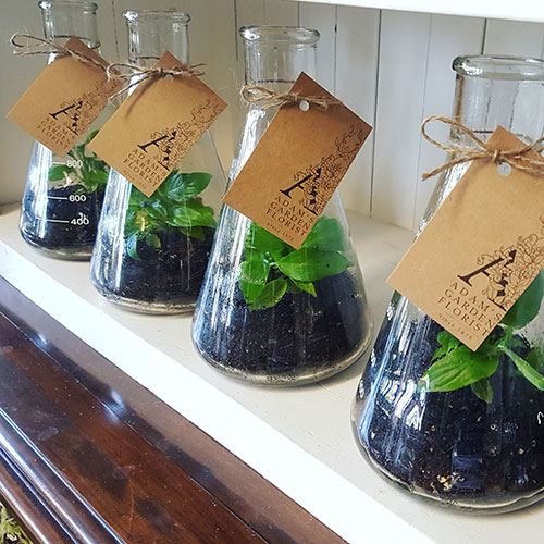 Flask With Living Plant Adam S Garden Florist