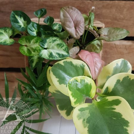 living gift indoor plants gold coast delivery