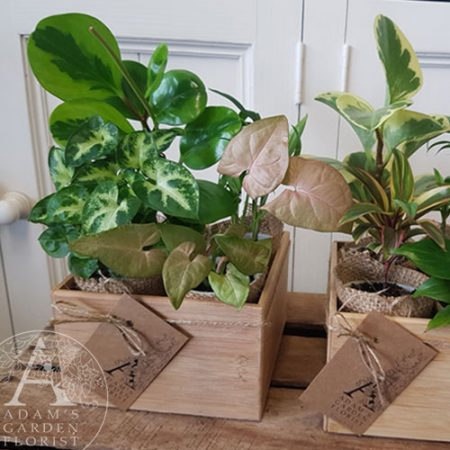 living gift indoor plants gold coast florist delivery