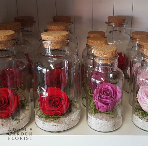 preserved rose red parkwood flower shop