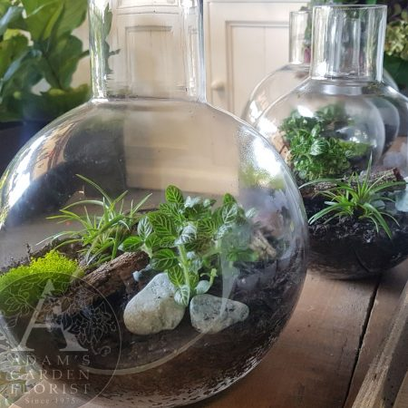 bottle-flask-terrarium gift Gold Coast florist delivery