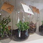 terrarium living gift Gold Coast florist delivery