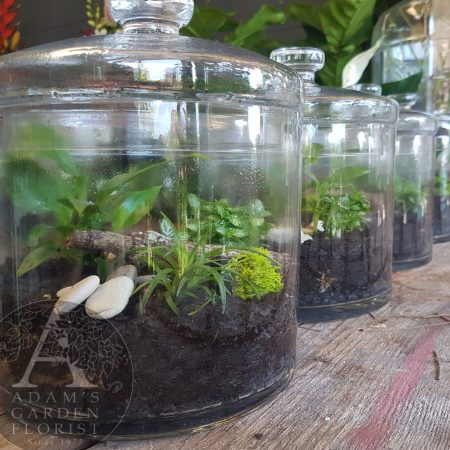 cookie-jar-terrarium quirky gift Gold Coast florist
