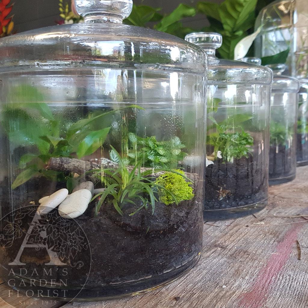 Cookie Jar Terrarium Adam S Garden Florist Parkwood