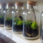 cork botttle mini terrarium Gold Coast delivery