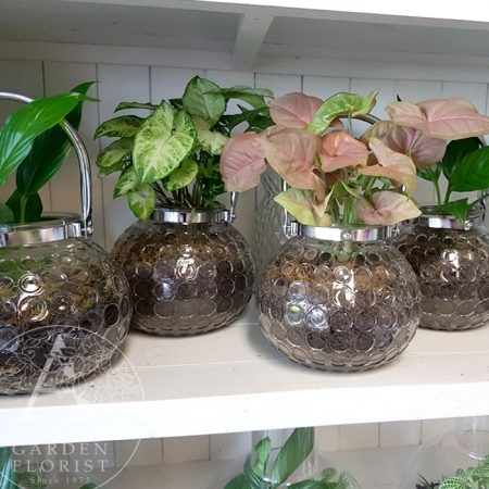 Gold Coast plants delivered in glass